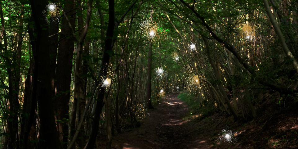 Some lights in trees frame a woodland path