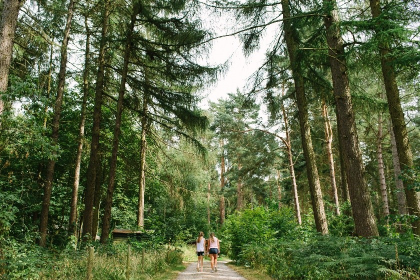 Two people walking on a path in woodland framed by large trees