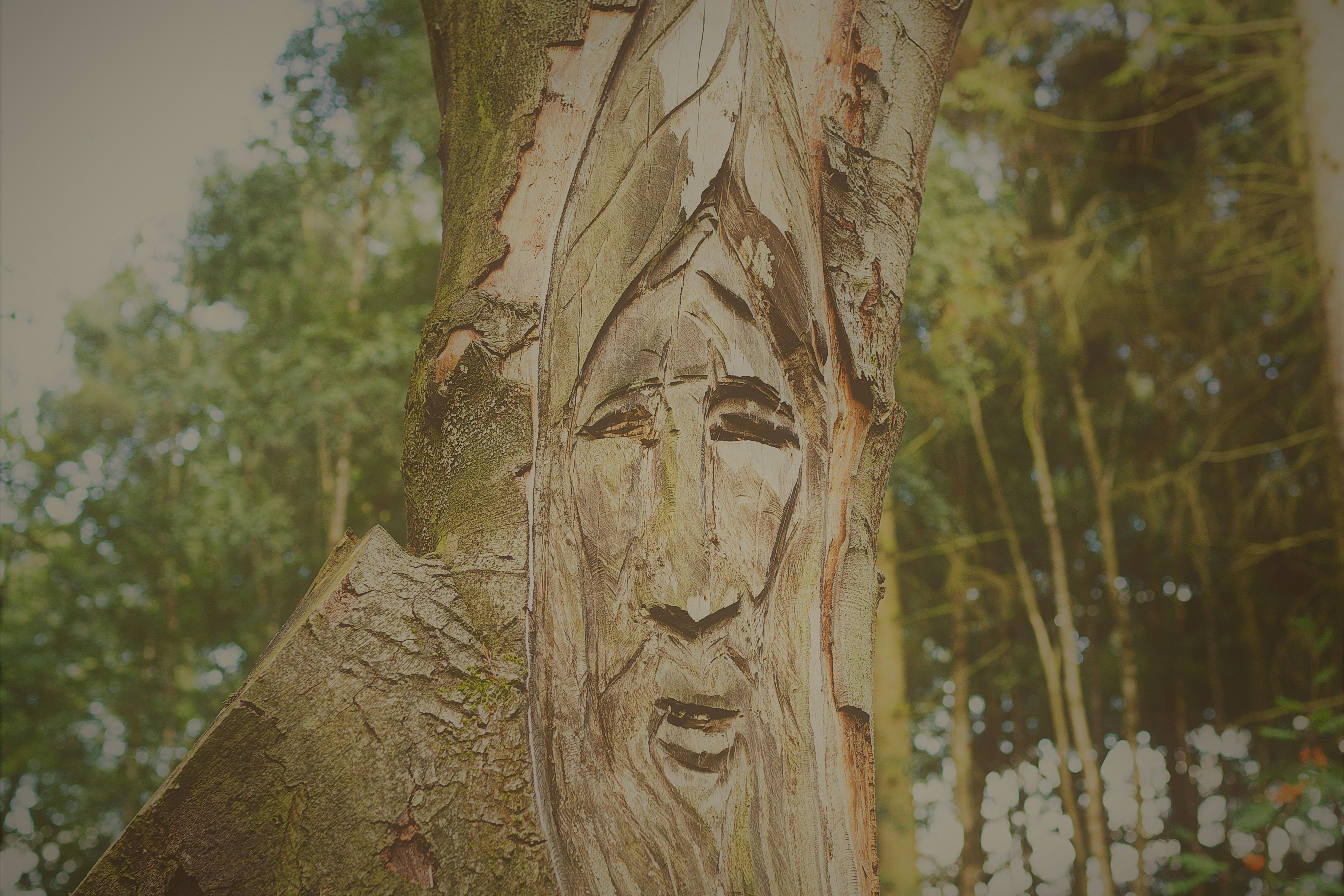 A face carved into the bark of a tree